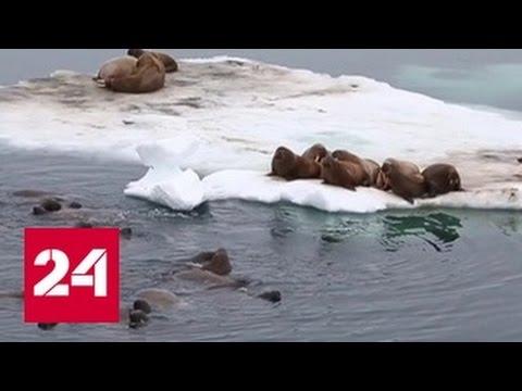 Ученые раскрыли секрет таяния льдов Арктики