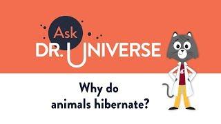 Why Do Animals Hibernate