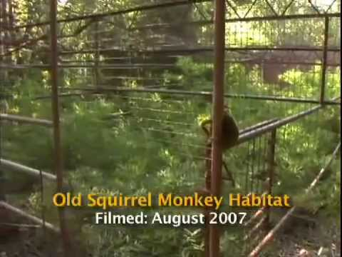 Squirrel Monkeys Get a New Home Video