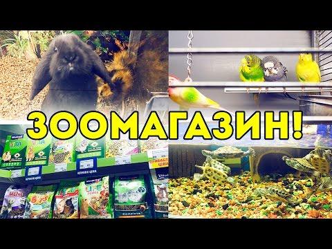 Поход в ЗООМАГАЗИН! MasterZoo в Sky Mall / Свинки Шоу / SvinkiShow