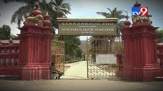 Cold drink for animals in Sakkarbaug Zoo to bring relief from scorching heat | Junagadh