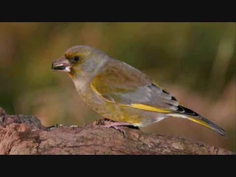 why do birds suddenly appear