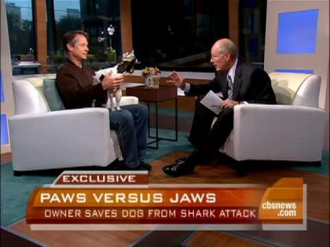 Man Punches Shark, Saves Dog