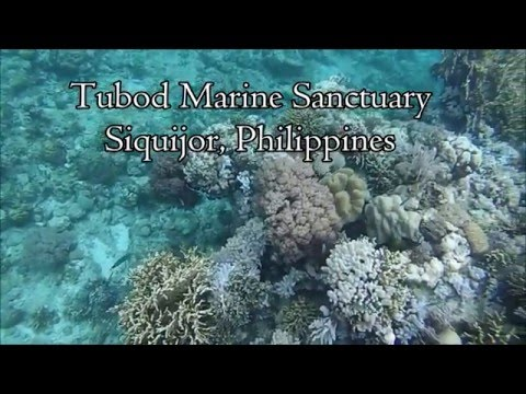 Philippines 2016 - Siquijor Island Best Snorkeling: Tubod Marine Sanctuary, Coco Grove