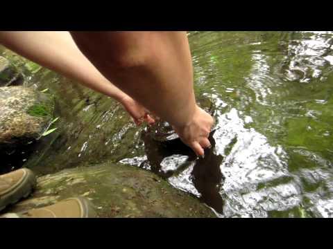 видео рыбалка на черепаху