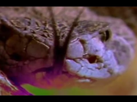 Созданные убивать Змея