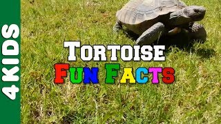 Tortoise | Fun Facts | 4 Kids