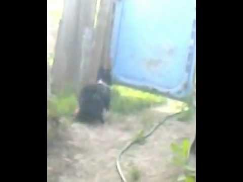 Видео Санни Леон. собака дрючит кота.