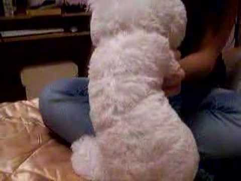 White Dancing Daddy Bear 2 video