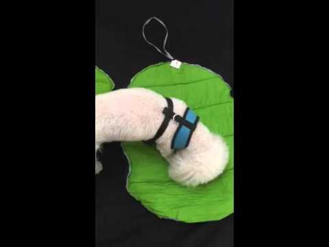 Dog Sleeping Bag Review   www.KeepDoggieSafe.com