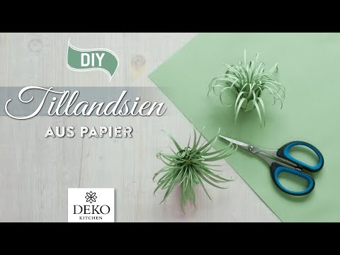 DIY: süße Tillandsien (Air Plants) aus Papier selbermachen [How to] Deko Kitchen