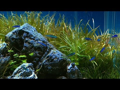 Better Homes And Gardens Gardening Aquascaping Youtube