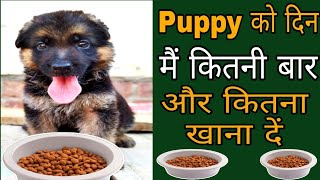 एक दिन में छोटे Puppy को कितनी बार और कितना खाना देना चाहिए / dogs price list in India/ cheapest dog
