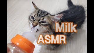 젖병에 든 우유먹기 ASMR!(no talking) Cat eating milk in a bottle 哺乳瓶でミルクを食べる猫