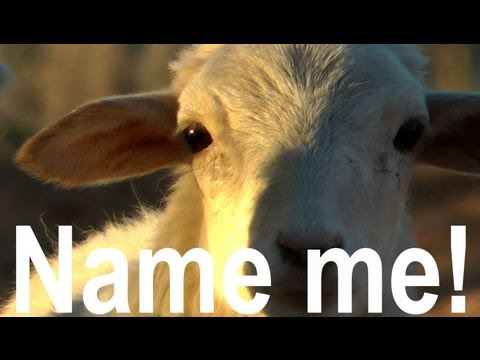 NAME THAT SHEEP! - Cast Your Vote Here