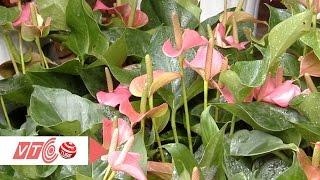 Cẩn trọng cây cảnh trong nhà là cây độc | VTC