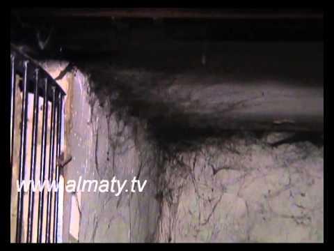 Дом в Алматы оккупировали блохи