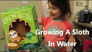 GROWING A SLOTH IN WATER   TODDLER ACTIVITY