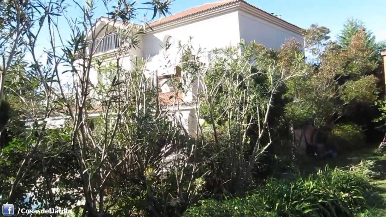 Poda de un seto de arbustos paso a paso para principiantes for Arbustos de jardin