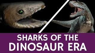 Early Sharks that Survived the Dinosaur Era – Quick fact about Frilled Shark