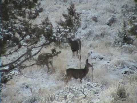 Big Buck Video