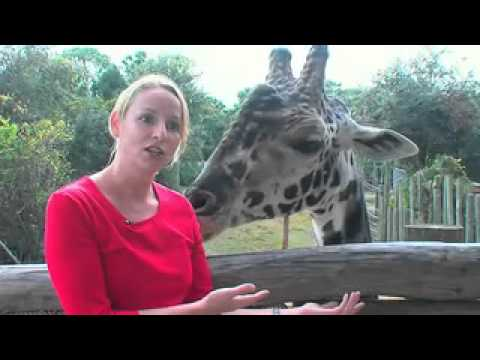 Brevard Zoo, Melbourne, Florida, USA - Unravel Travel TV