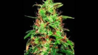 Watch Andre Nickatina 2 B U video