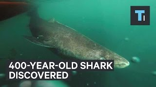 400-year-old shark discovered