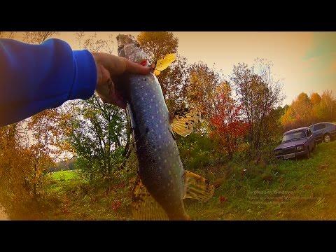 ловля хищника на джиг в октябре | ловлю на спиннинг | ловля щуки | видео 1080