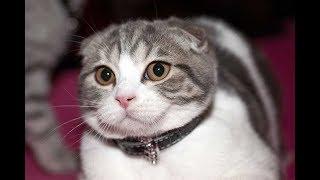 Cute Cats & Dogs Vine Compilation 2019 NEW   Cute Pets Vine Videos #8