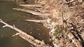 Metal Detecting The Fallen Timbers Of Blank Creek