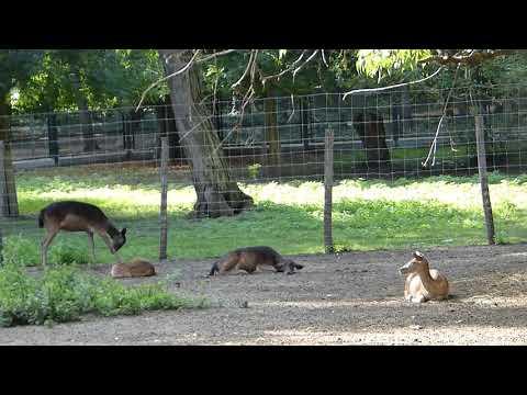 Margaret Island Zoo