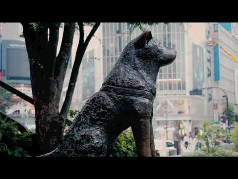 Hachiko Tribute 2010 video