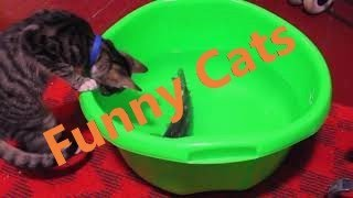 Funny cats video 2019