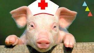 Animales que te salvan la vida y… ¡no lo sabes!