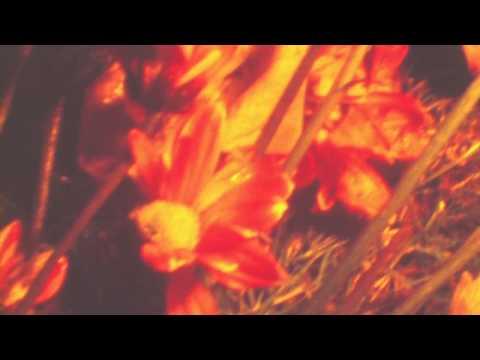 Tamaryn - The Garden