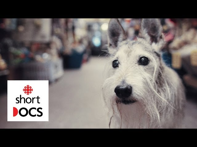 A celebration of old dogs, from the people who love them most | In Dog Years