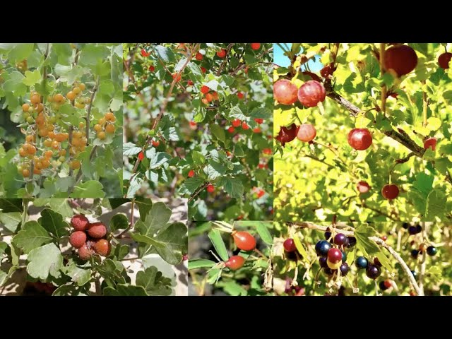 Growing Indigenous Food Forests with Lilian Hill