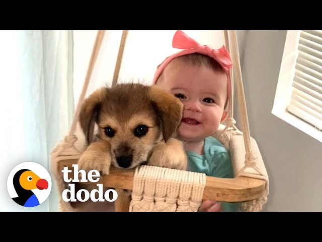 This Puppy And Baby Sister Are Perfectly In Sync With Everything They Do   The Dodo Soulmates