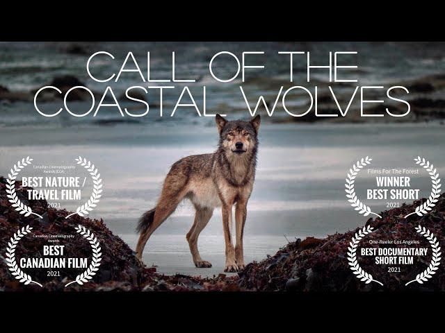 Call Of The Coastal Wolves - British Columbia sea wolf mini-documentary