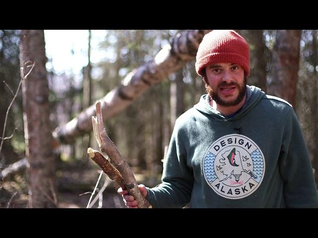 Harvesting Birch Bark Responsibly