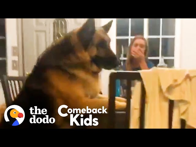 150-Pound German Shepherd Loses 50 Pounds | The Dodo Comeback Kids