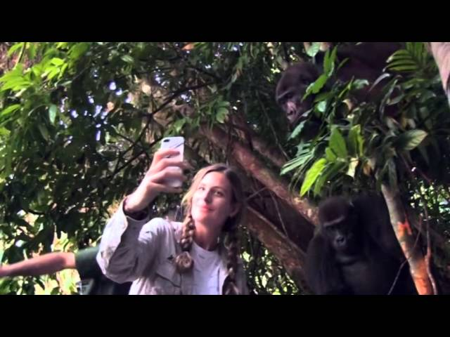 Tansy Aspinall And The Gorillas: Reunited At Last! - OFFICIAL VIDEO