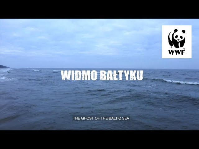 WIDMO BAŁTYKU   The Ghost of the Baltic Sea   Dokument o Sieciach Widmo   Doc about ghost nets