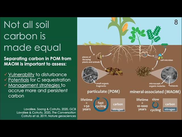 Carbon sequestration in soils   Francesca Cotrufo   Global Carbon Management Workshop