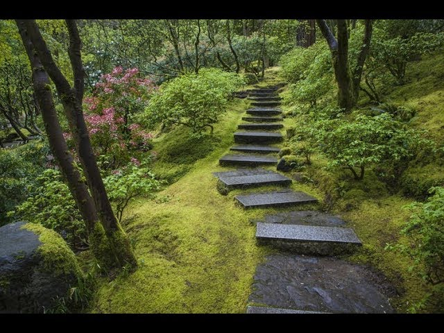 Moss in Japan Japanology