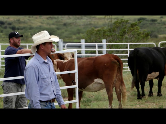 Ranching on the Mexican Border