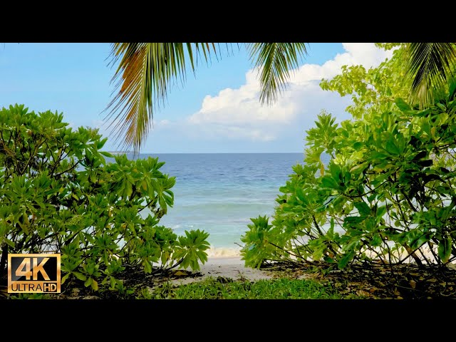 Relaxing instrumental guitar music with 4k Maldives nature ocean video 8 hours for nap and sleep