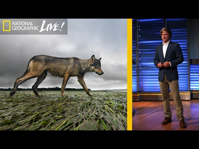A Quest to Find Canada's Elusive Coastal Wolf | Nat Geo Live