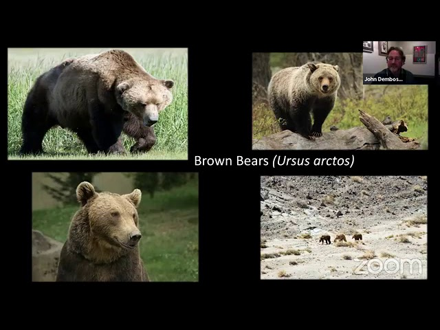 Science Division Live: Colorado's Last Grizzly Bear